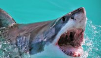 1_Close-Up-Of-Shark-Swimming-In-Water