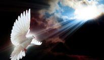 white-dove-